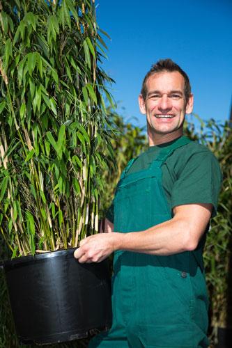 Bambus-im-Topf