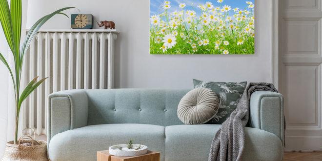 Bild Blumen Gänseblümchen im Wohnzimmer