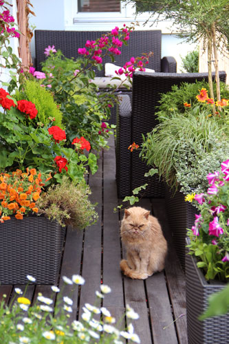 Wie Sie ihrem Balkon – ein sommerliches Flair einhauchen ...