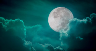 gärtnern nach dem Mondkaender