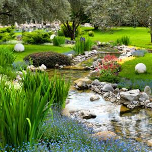Bäume und Pflanzen für den japanischen Garten | Garten Blog