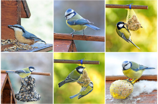 vogelfreundlicher Garten