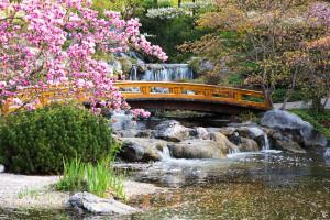 Bäume und Pflanzen für den japanischen Garten  Garten Blog