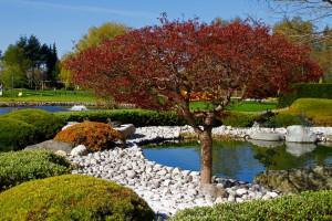 bäume und pflanzen für den japanischen garten   garten blog, Garten und Bauen