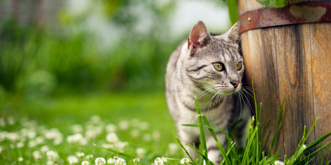 Katzenkot im Garten