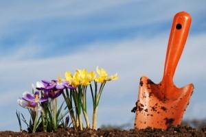 Fruhbluher Pflanzen Krokusse Narzissen Und Hyazinthen Garten Blog