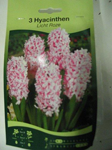 Startseite  Shop  Blumen & Pflanzen  Blumenzwiebeln  Hyazinthen [R