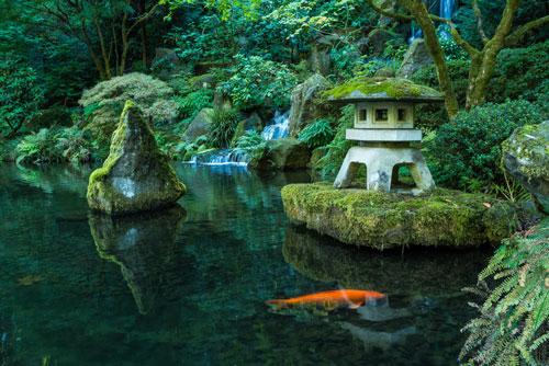Koikarpfen-in-japanischen-garten