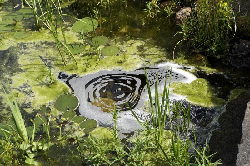 nat rliche hilfsmittel gegen algen im teich garten blog. Black Bedroom Furniture Sets. Home Design Ideas