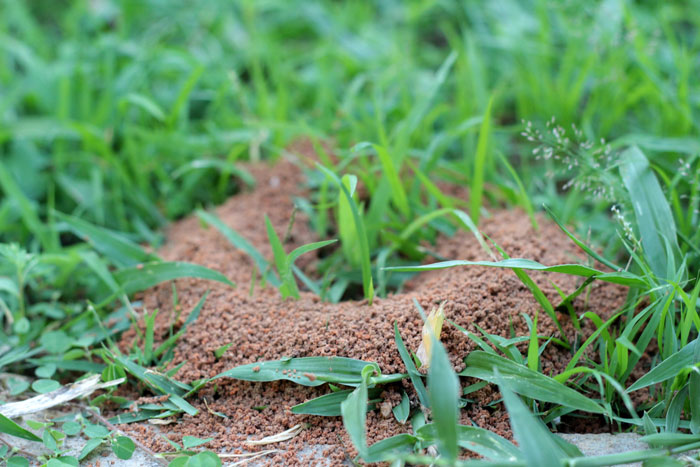 Ameisennest