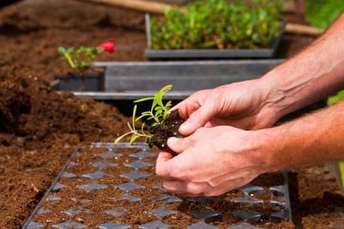 Was Pflanzt Man Im Januar An Garten Blog