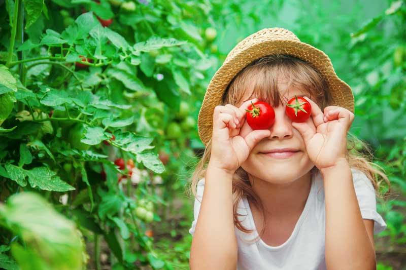 erfolgreich-tomaten-pflanzen