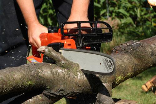gartenrecht-Baum-faellen