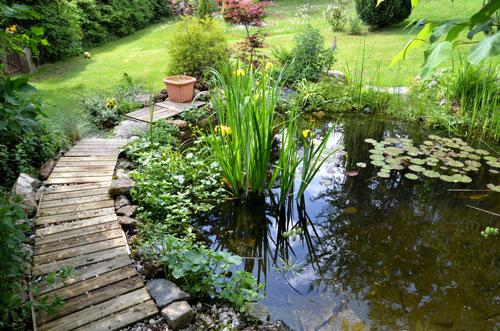 Die Teichpflege In Der Sommerzeit Ist Sehr Wichtig Garten Blog