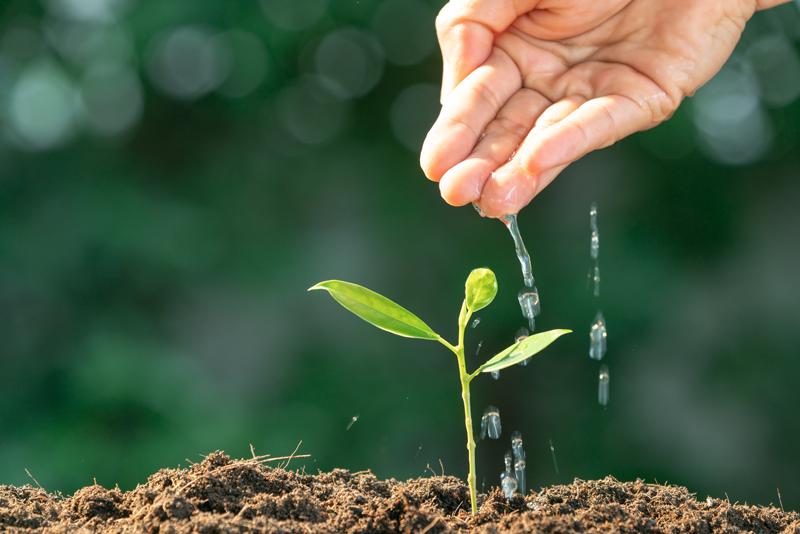 Nährstoffe Für Pflanzen Was Brauchen Pflanzen Zum Leben Garten Blog