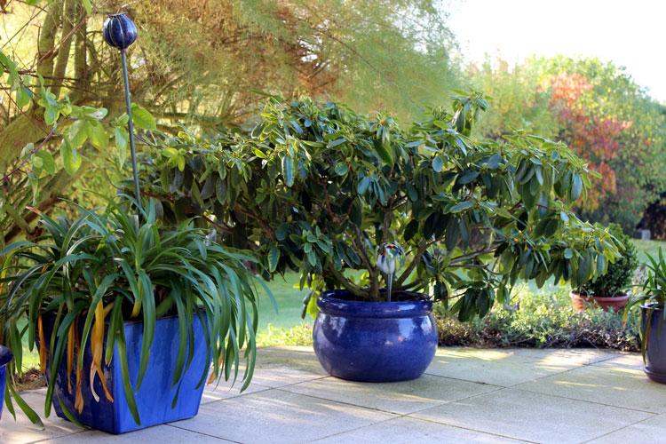 Die tolle Vielfalt von Pflanzkübeln | Garten Blog