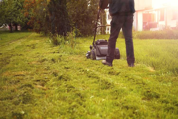 Rasen mulchen