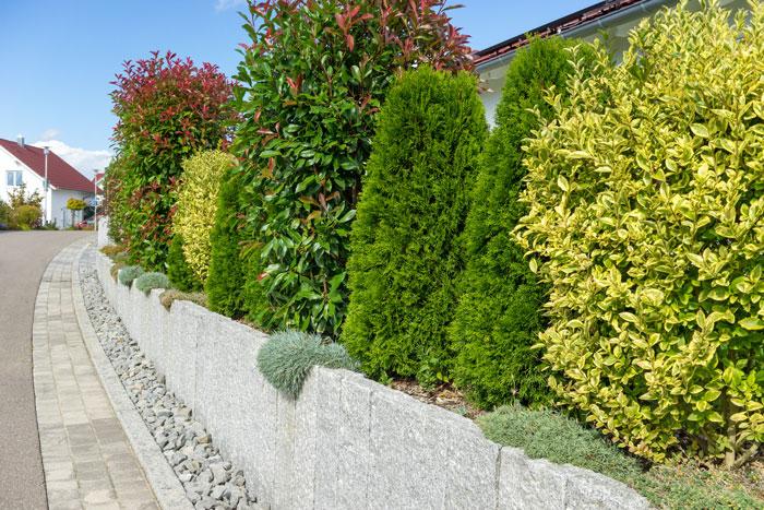 Lebender Zaun Sichtschutz : lebender sichtschutz im garten aus gr nen pflanzen garten blog ~ Whattoseeinmadrid.com Haus und Dekorationen